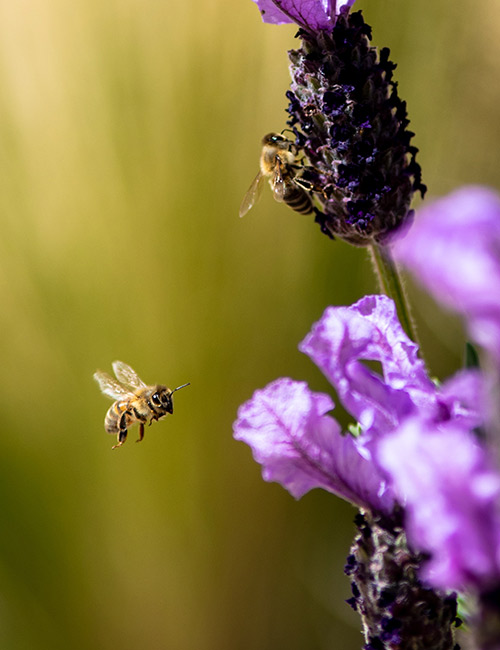 bee near flower photo